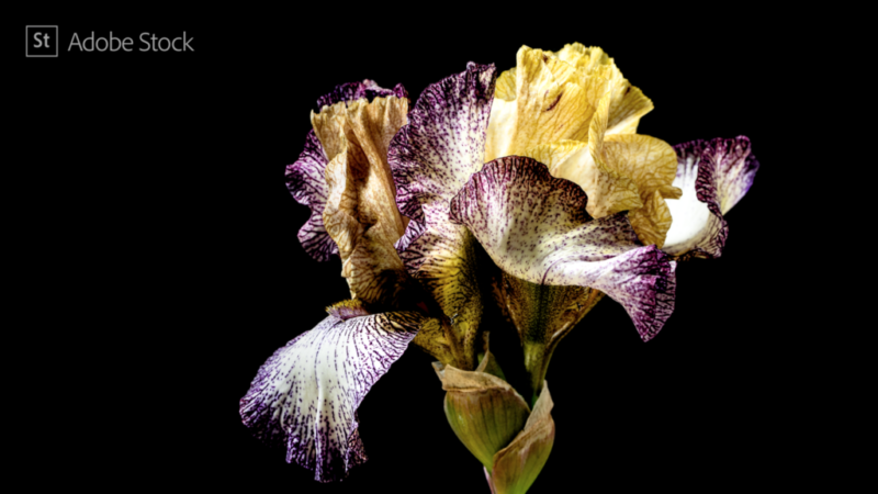 """Interview on the making of Adobe """"Depth of Field"""" Series"""